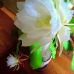 食べれる花